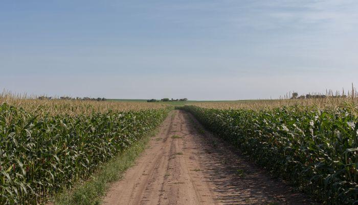 cornfields_3000
